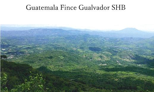 グァテマラ・グアルバドール農園SHB