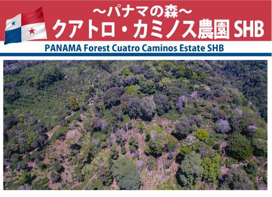 パナマの森 クアトロ・カミノス農園SHB